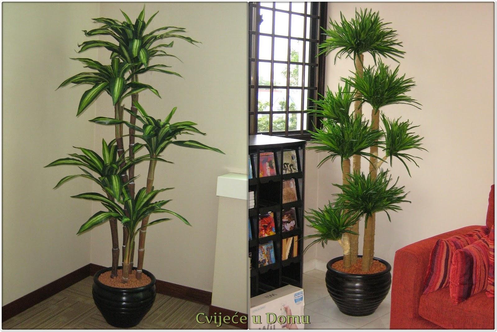 Koje sobne biljke držati u dnevnoj sobi? - Moj Vrt Cvijeća