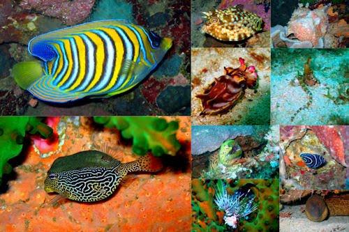 Peces, corales y arrecifes en el fondo del mar V