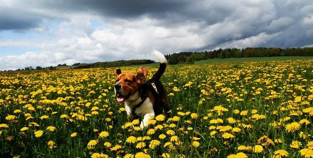 Agora é possível pagar para clonar o seu cão na Coreia do Sul