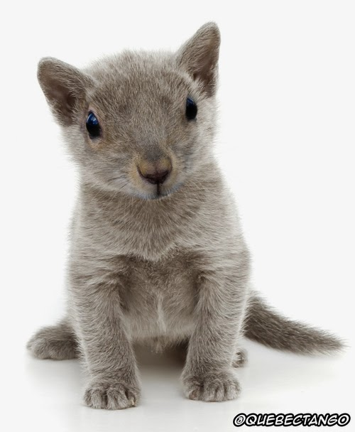 23-Squirrel-and-Kitten-a-Squitten-Graphics-Designer-Digital-Taxidermist-Animangler-www-designstack-co