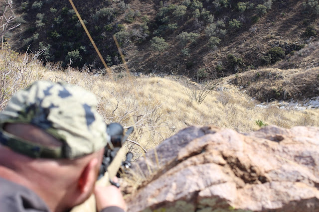 Mexico%2BCoues%2BDeer%2BHunting%2Bin%2BSonora%2Bwith%2Bguides%2BColburn%2Band%2BScott%2BOutfitters%2B3.JPG
