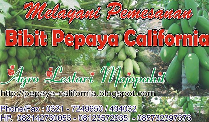 Melayani Pesanan Bibit dan Benih Pepaya California