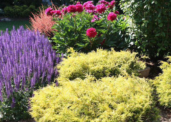 A guide to northeastern gardening garden blogger 39 s bloom for Landscaping with perennials designs