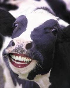 lembu senyum