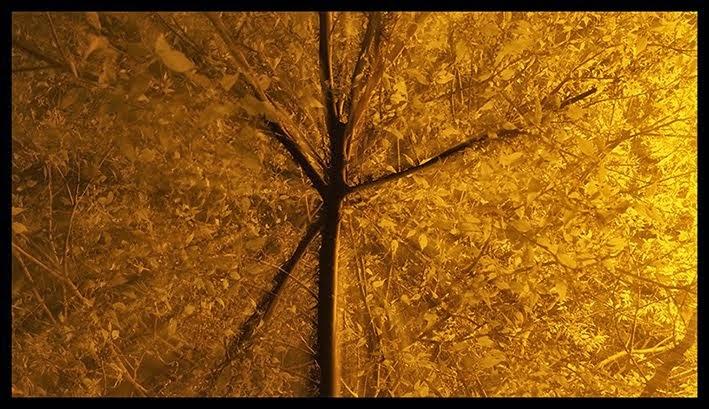 A l'interieur de l'arbre2