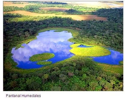 fondo mundial para la naturaleza: