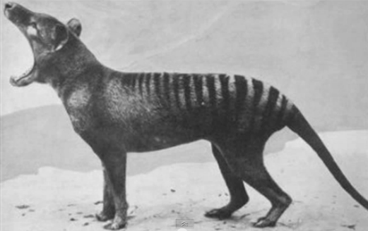 Extinct Animals Rediscovered Video