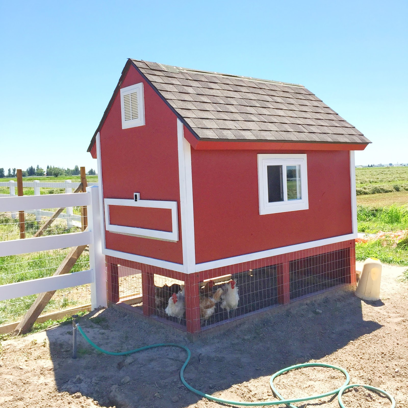 How to build a chicken coop from pallets a vision to for Plans for chicken coops