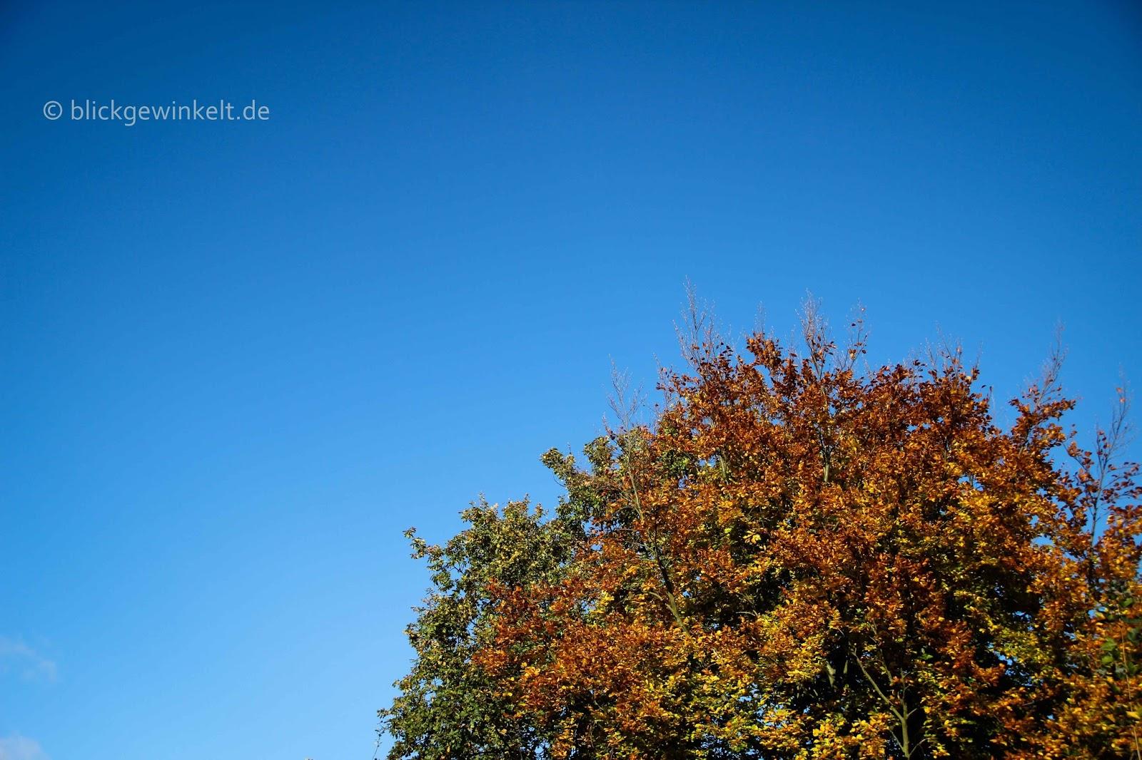 Herbstlaub und blauer Himmel