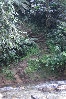 The slippery, winding path to Colombia's 'La Cuidad Perdida' - a good representation of the difficult journey to peace that lies ahead
