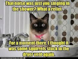 http://catnipoflife.wordpress.com/2014/01/15/singing-in-the-shower-2/