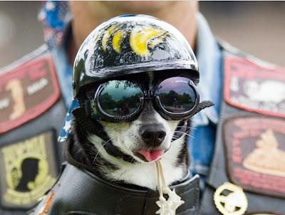 Biker-funny-dog
