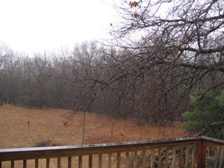 photo of wet day in the backyard