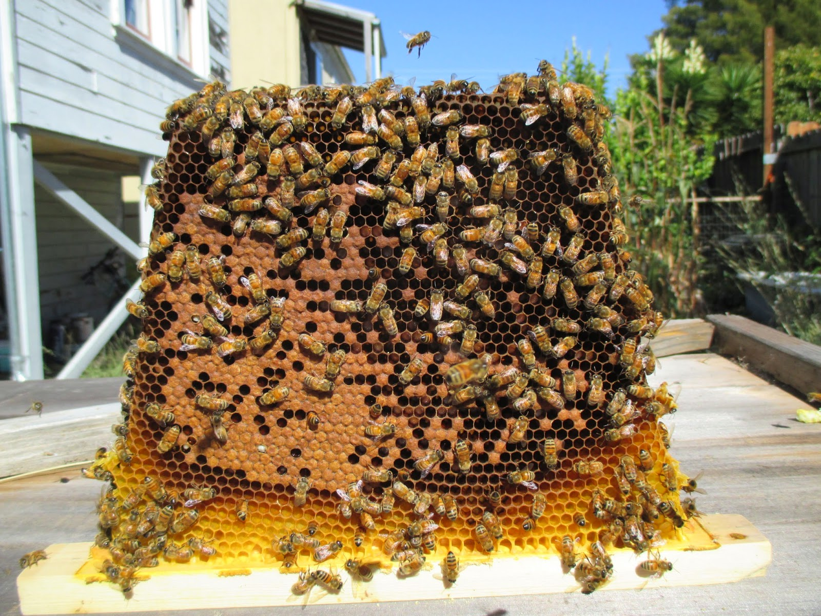 New to bees.: Anatomy of a hive death