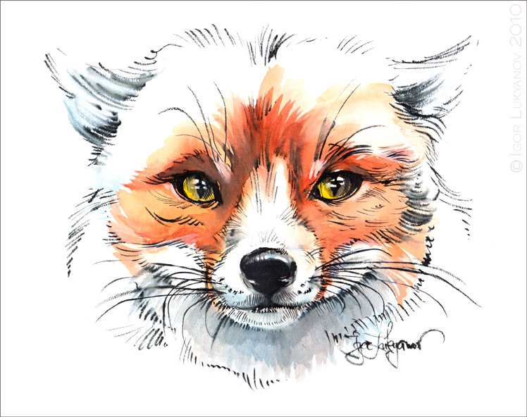 Dessins d 39 un renard et d 39 un loup - Renard en dessin ...