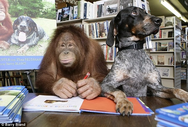 The Unlikely Friendship Between An Orangutan And A Dog