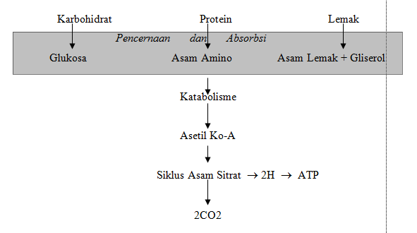 Go-Livestock: Pengertian Metabolisme