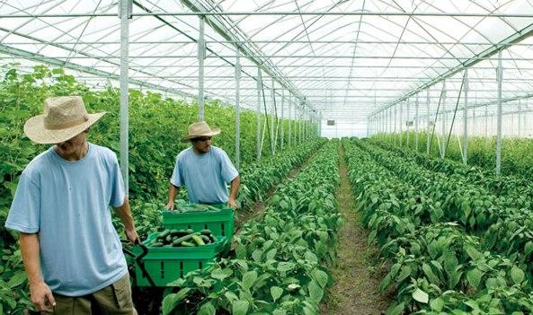 Subsidi Pertanian Organik Lebih Banyak ke Perusahaan