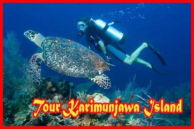 Diving Karimunjawa