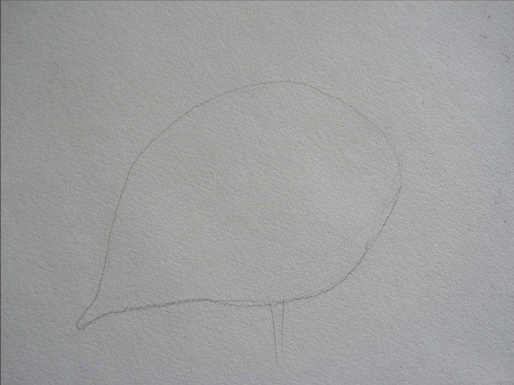 как нарисовать розу карандашом