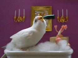 passaro bebendo champagne na banheira