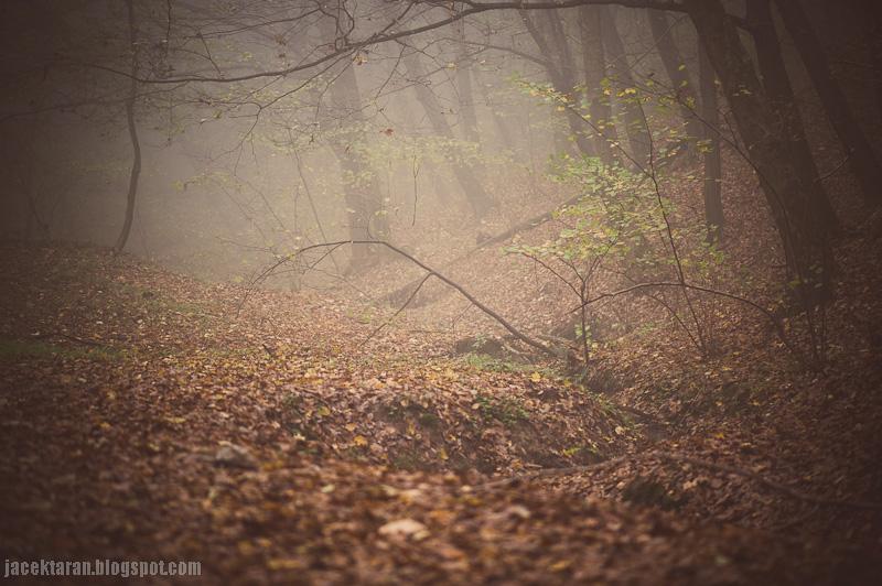 Krakow, mgla, pejzaz, jacek taran, rajsko