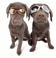 Gafas para sol, oftalmologia