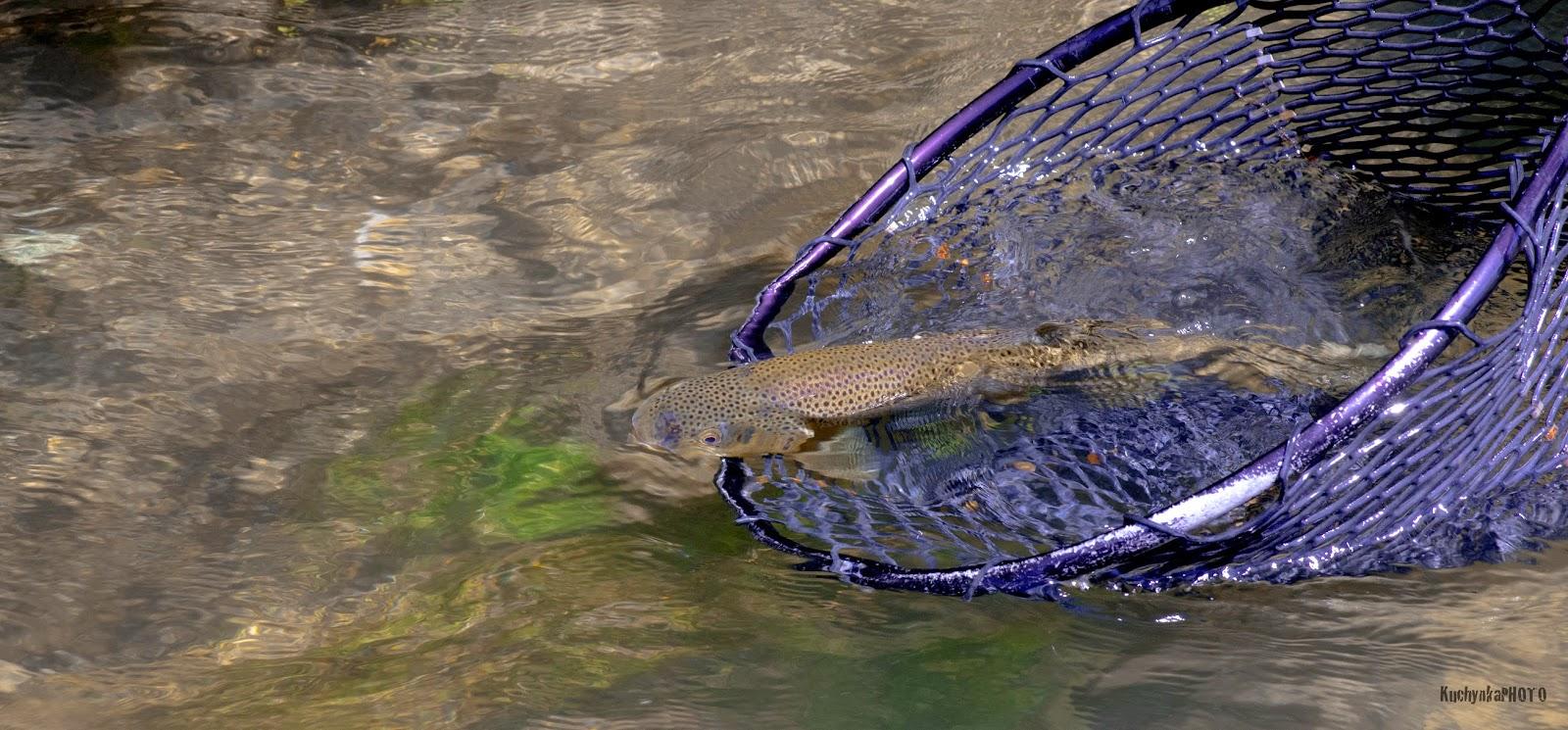 Floatfisher May 26 2015