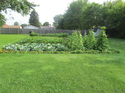 Garden Update 7/10/15
