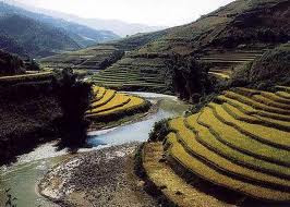 Terraced field in Sapa