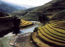 Terraced field in Sapa