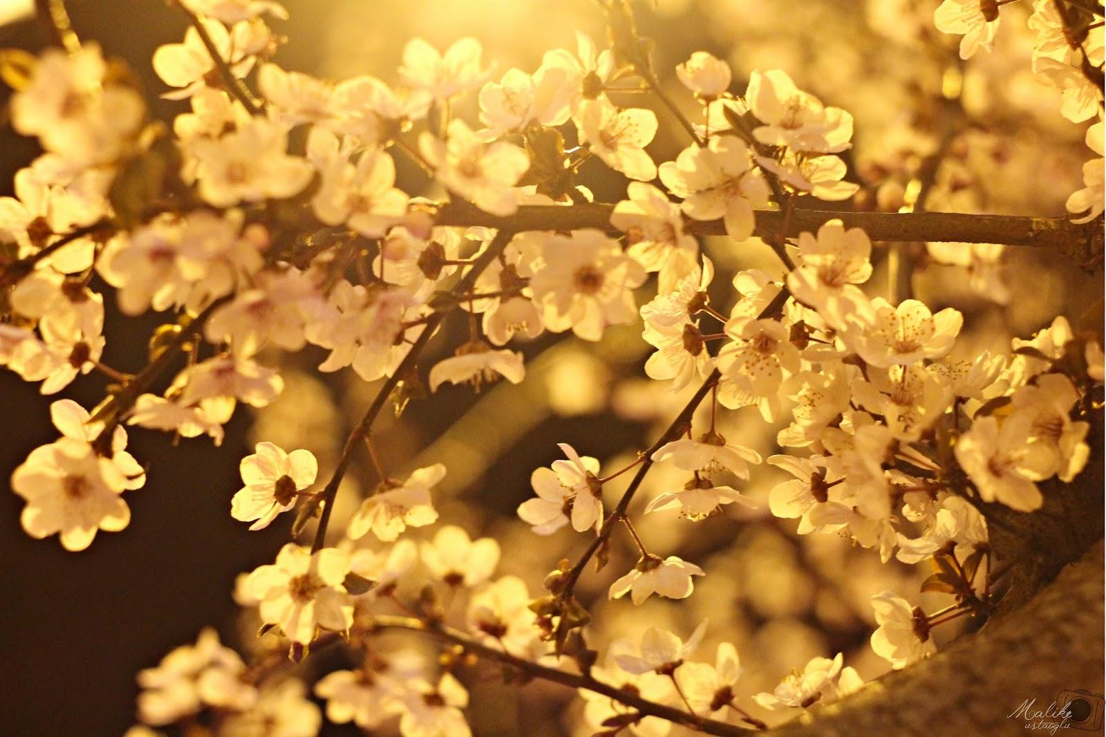 Baharlar Çekiyor İçimiz