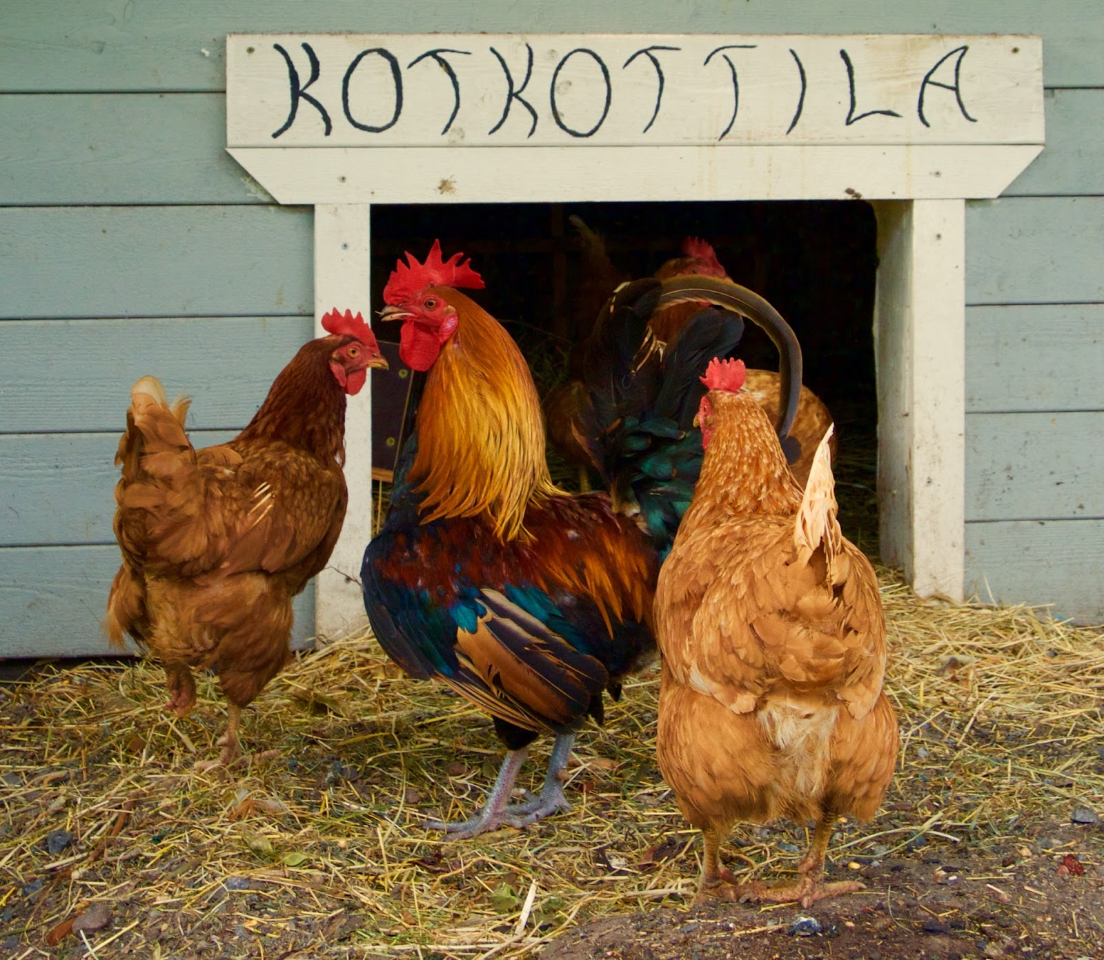 A house for chickens with their own hands: projects, selection of materials, stages of construction 8