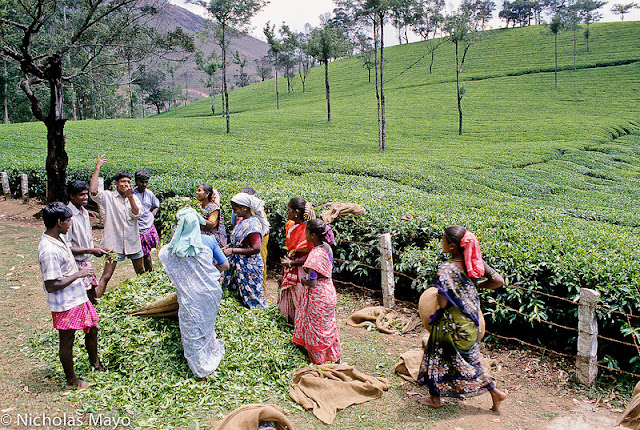 Tour operators India. Book Munnar trip