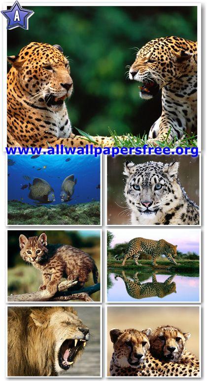60 Amazing Animals Wallpapers 1280 X 1024 [Set 35]