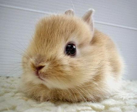 "FACT: A young rabbit is also called a ""kitten"""