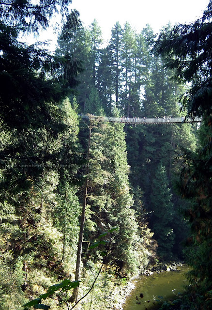 Capilano Suspension Bridge and the Canyon of Capilano River