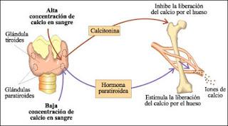 Hipercalcemia