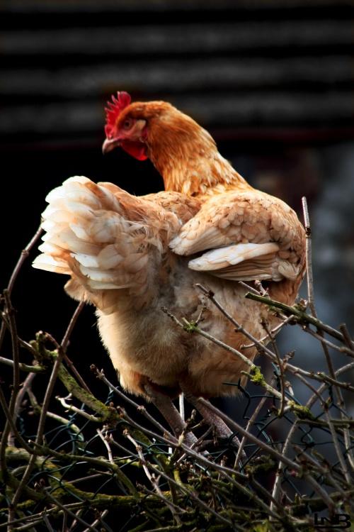 Maigrir avec la m thode montignac phase 1 cul de poule - Cul de poule en cuisine ...