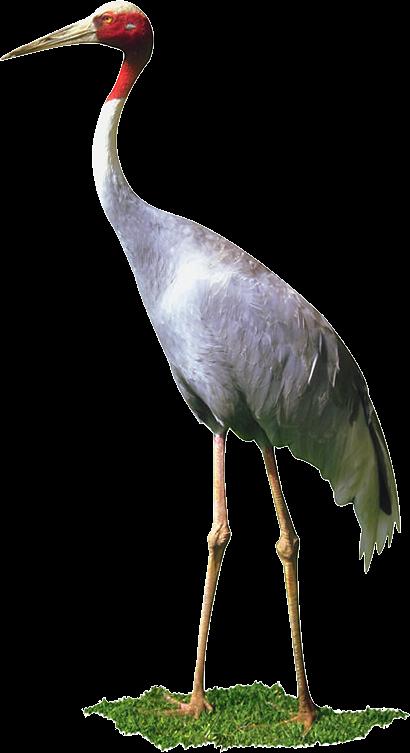 سكرابز طيور وحيوانات