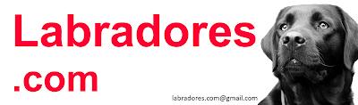 Labradores.com