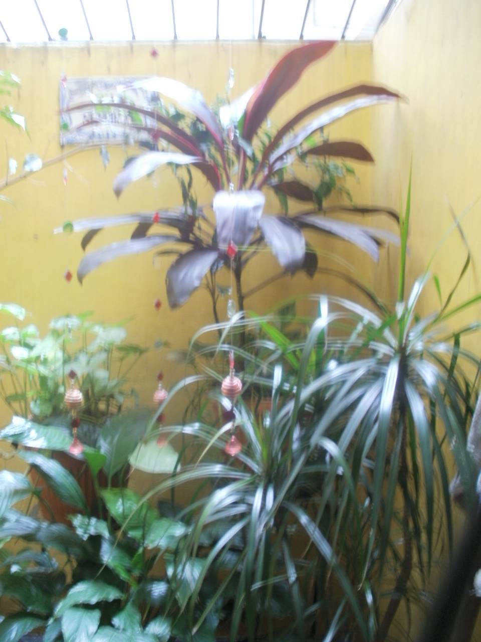 Adri jardineria cuidado de plantas de interior - Cuidados plantas interior ...