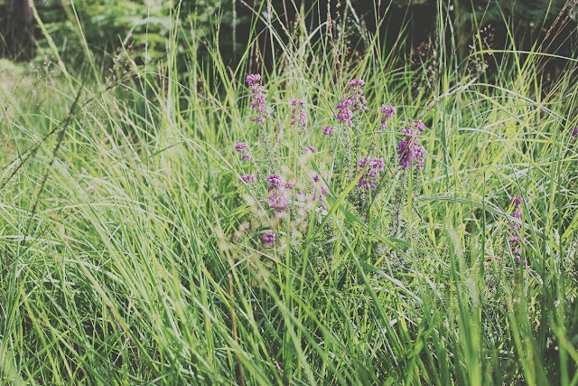 grass-forest-countryside-ringwood-summer-story-todaymyway