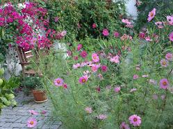Flores ... de outros lugares!