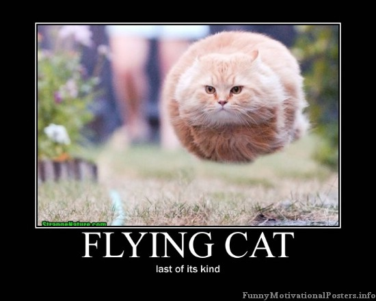 Funny demotivational cat posters