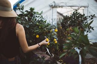 Mujeres y jóvenes: los grandes olvidados en el desarrollo económico agrícola
