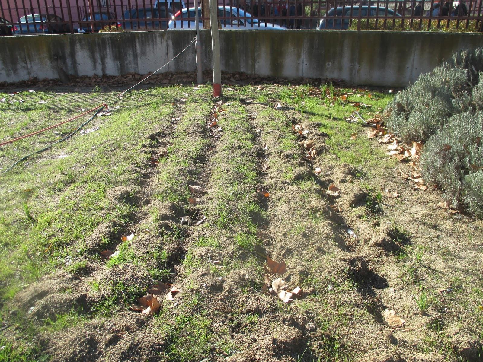 En torno al huerto preparar el huerto escolar for Preparar el huerto en invierno