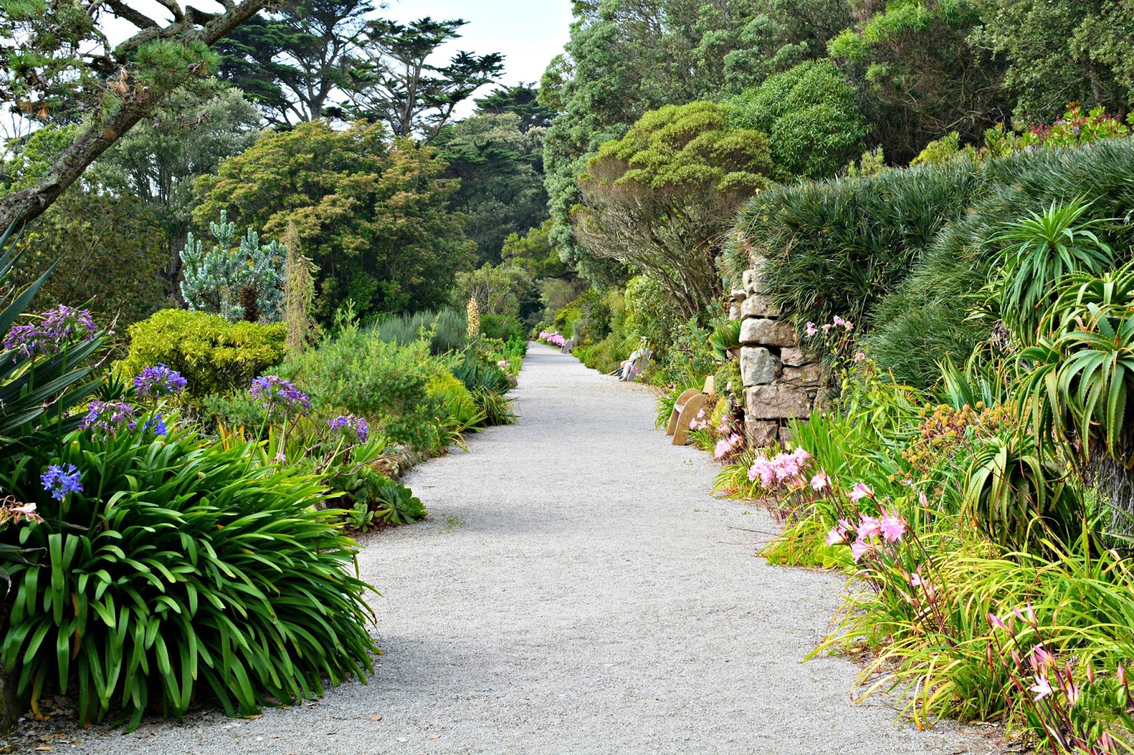 Abbey Gardens on Tresco in Isles of Scilly
