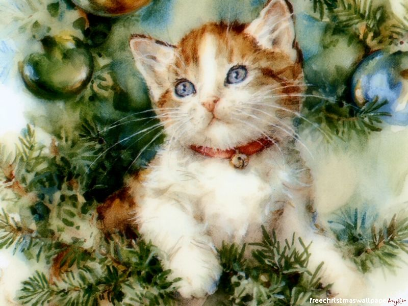 christmas kitten wallpapers wallpapers high definition