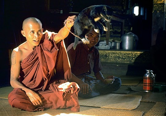 Jumping Cat Monastery Inle Lake
